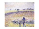 Shepherd with Sheep, 1888 Reproduction procédé giclée par Camille Pissarro