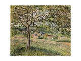 Apple Tree in Eragny, 1884 Reproduction procédé giclée par Camille Pissarro