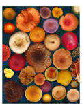Wild Mushrooms all Caps Fungi Forest Prints