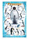 Penguins for Kids Kunstdrucke