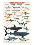 Dangerous Sharks Prints