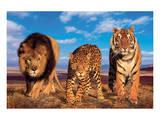 Three Big Cats Plakater