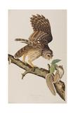 Illustration from 'Birds of America' by John James Audubon, 1827-38 Giclee Print by John James Audubon