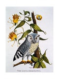 Little Horned Owl, from 'Indian Zoology', Published 1790 Giclée-tryk af Thomas Pennant