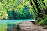 Wooden Path Near A Forest Lake Cartel de plástico por  Lamarinx