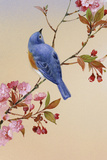 Blue Bird on Cherry Blossom Branch Plastic Sign