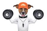 Fitness Dog Signe en plastique rigide par Javier Brosch