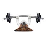 Personal Trainer Dog Signe en plastique rigide par Javier Brosch