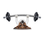Personal Trainer Dog Muovikyltit tekijänä Javier Brosch