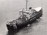 Confiscated Marijuana Aboard Coast Guard Cutter, 1975 Fotoprint