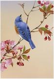 Sininen lintu ja kukkivan kirsikkapuun oksalla Juliste