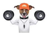 Fitness Dog Pôsters