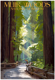 Muir Woods National Monument, California - Pathway Print