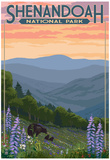Shenandoah National Park, Virginia - Black Bear and Cubs Spring Flowers Poster