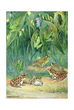 A Variety of Tree and Meadow Frogs Await Low Flying Insects Giclee Print by Hashime Murayama