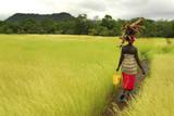 Bassari Woman Carrying Firewood on Her Head. Bassari Country, East Senegal Lámina fotográfica por Enrique Lopez-Tapia