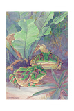 The Cannibalistic Horned Toads of South America Giclee Print by Hashime Murayama