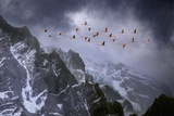 Chilean Flamingos (Phoenicopterus Chilensis) in Flight over Mountain Peaks, Chile Photographic Print by Ben Hall