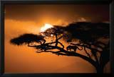 Afrikanischer Himmel Poster