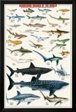 Dangerous Sharks Print