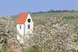 Cherry Blossom in the Eggenen Valley and Church Tower of Obereggen Photographic Print by  Marcus