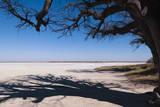 Baines Baobabs, Kudiakam Pan, Nxai Pan National Park, Botswana, Africa Photographic Print by  Sergio