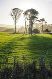 Backlit Trees in Green Fields, the Catlins, South Island, New Zealand, Pacific Photographic Print by  Michael