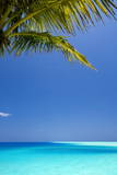 Shades of Blue and Palm Tree, Tropical Beach, Maldives, Indian Ocean, Asia Fotografie-Druck von  Sakis