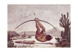 Cabocle a Civilized Indian Shooting a Bow Print by Jean Baptiste Debret