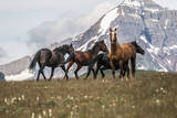 Horses Along the Rocky Mountain Front, Montana Photographic Print by Steven Gnam
