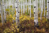 Fall Color in and around the Mountains in Utah Reproduction photographique par Patrick Brandenburg
