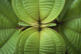 Selective Focus of the Green Leafs of a Tropical Plant Reproduction photographique par Patrick Brandenburg