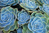 Succulents Photographic Print by Bennett Barthelemy