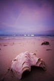 A Clam Shell Sits on a Beach While a Rainbow Appears on the Island of Mamutik, Borneo, Malaysia Photographic Print by Dan Holz
