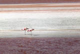 Laguna Colorada Is a Shallow Salt Lake in the Southwest of the Altiplano of Bolivia Reproduction photographique par Patrick Brandenburg