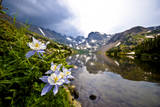 Colorado Columbines Blooming in Early July with Spring Run Off, Indian Peaks Rocky Mountains Photographic Print by Daniel Gambino