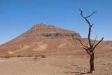 Kunene, Namibia. Dead Tree in Desert Landscape Near Puros Conservancy Fotografie-Druck von Bill Bachmann