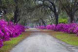 USA, Georgia, Savannah, Azaleas in Historic Bonaventure Cemetery Reproduction photographique Premium par Joanne Wells