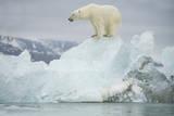 Norway, Spitsbergen, Woodfjorden. Polar Bear Atop a Glacial Ice Floe Stampa fotografica di Steve Kazlowski
