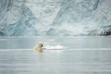 Norway, Spitsbergen, Fuglefjorden. Polar Bear Swimming Stampa fotografica di Steve Kazlowski