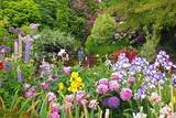 Schreiner Iris Gardens in Salem, Oregon Fotografisk trykk av Craig Tuttle