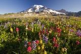 Mount Rainier and Wildflowers Fotografisk trykk av Craig Tuttle