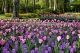 Keukenhof Gardens Near Lisse in Springtime Bloom Fotografie-Druck von Darrell Gulin