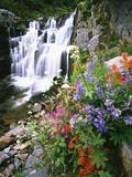 Wildflowers in Bloom by Waterfall Premium fotografisk trykk av Craig Tuttle