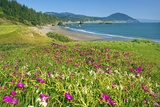 Wildflowers at Port Orford, Looking South Down Oregon Coast. Photographic Print by Craig Tuttle