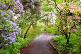 Spring Flowers in Crystal Springs Rhododendron Garden, Portland, Oregon, USA Fotografisk trykk av Craig Tuttle