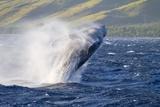 Humpback Whale Fotografisk trykk av Ron Dahlquist