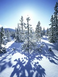 Sun Shining on Snow-Covered Trees Fotografisk trykk av Craig Tuttle