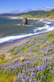 Lupine Wildflowers and Rock Formations at Cape Blanco, South Oregon Coast Fotografisk trykk av Craig Tuttle