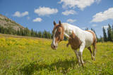 Horse in an Alpine Meadow, Slate Pass, Pasayten Wilderness, Washington Photographic Print by Steve Kazlowski